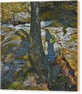 Tree And 3 Shadows Wood Print