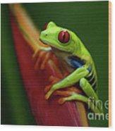 Tree Frog 19 Wood Print