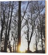 Trees With Sunlight Wood Print