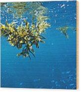 Tropical Seaweed Wood Print by Alexis Rosenfeld