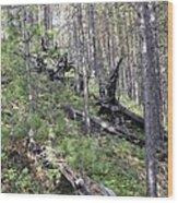 Tunguska Forest Wood Print