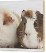 Two Guinea Pigs Wood Print