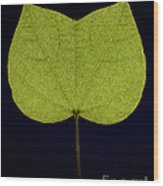 Two Lobed Leaf Wood Print