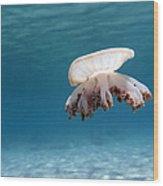 Upside Down Jellyfish In Caribbean Sea Wood Print