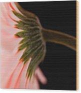 Usa, Utah, Lehi, Close-up Of Pink Daisy Wood Print