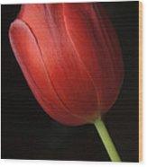 Valentine Tulip Wood Print