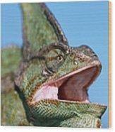 Veiled Chameleon Chamaeleo Calyptratus Wood Print