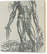 Vesalius De Humani Corporis Fabrica Wood Print by Science Source