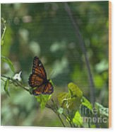 Viceroy Butterfly Wood Print