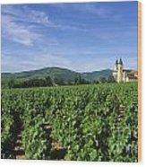 Vineyard. Regnie-durette. Beaujolais Wine Growing Area. Departement Rhone. Region Rhone-alpes. Franc Wood Print