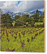 Vineyards And Mt St. Helena Wood Print