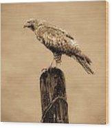 Vintage Hawk Wood Print
