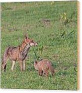 Vixen And Cub Wood Print