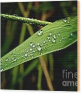 Water Drops On Blade Of Grass Wood Print