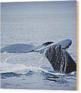 Whales Fluke Wood Print