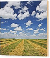 Wheat Farm Field At Harvest In Saskatchewan Wood Print by Elena Elisseeva