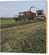 Wheat Harvest For Silage Wood Print