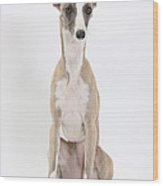 Whippet Wood Print