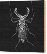 Whipscorpion X-ray Wood Print