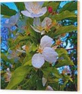 White Beauty Wood Print by Sergio Aguayo