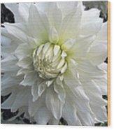 White Dahlia Beauty Wood Print