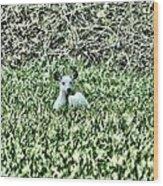 White Deer Wood Print
