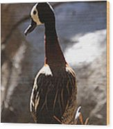 White Faced Whistling Duck Wood Print
