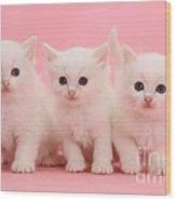 White Kittens Wood Print