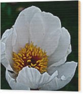 White Petals Wood Print