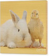 White Rabbit And Bantam Chick On Yellow Wood Print
