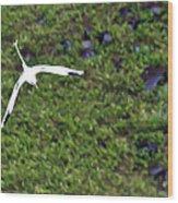 White-tailed Tropicbird Wood Print