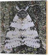White Underwing Moth Wood Print
