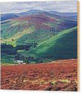 Wicklow Way, Co Wicklow, Ireland Long Wood Print