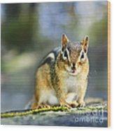 Wild Chipmunk Wood Print