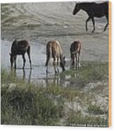 Wild Spanish Mustangs Wood Print