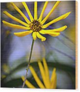 Wild Swamp Daisy Wood Print