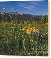Wildflower Meadows And The Anthracite Range Wood Print