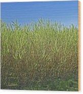 Willow Bioenergy Crop, Sweden Wood Print