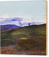Wine Vineyard In Sicily Wood Print