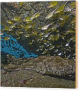 Wobbegong Shark And Cardinalfish, Byron Wood Print