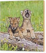 Wolf Cubs On Log Wood Print