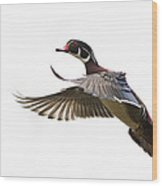 Wood Duck Wood Print by Mircea Costina Photography