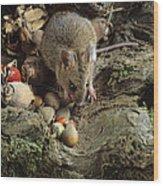 Wood Mouse Feeding Wood Print