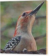 Woodpecker II Wood Print