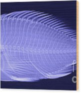 X-ray Of A Flame Hawkfish Wood Print