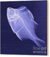 X-ray Of A Humphead Glassfish Wood Print