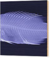 X-ray Of A Wrasse Fish Wood Print