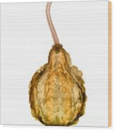 X-ray Of Fall Decorative Gourd Wood Print