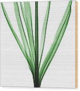 X-ray Of Hyacinth Wood Print