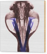 X-ray Of Kodiak Bear Skull Wood Print